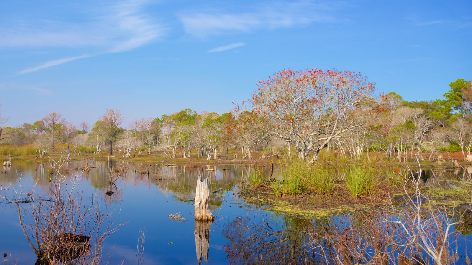 St. Andrews State Park caracterizando pântano e cenas tranquilas