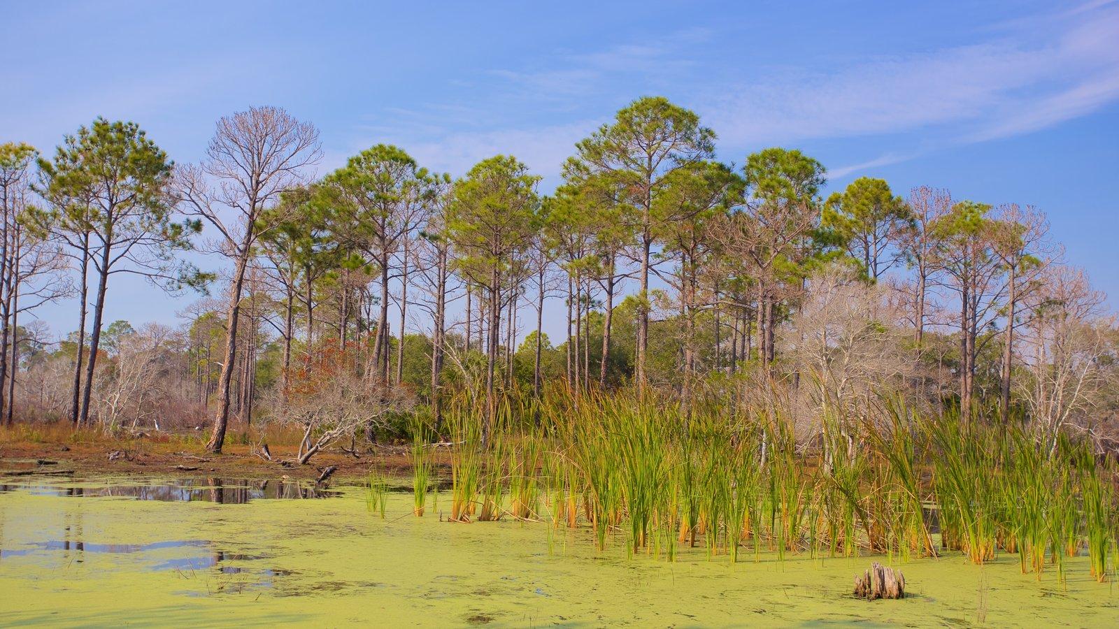 St. Andrews State Park que inclui cenas tranquilas e pântano