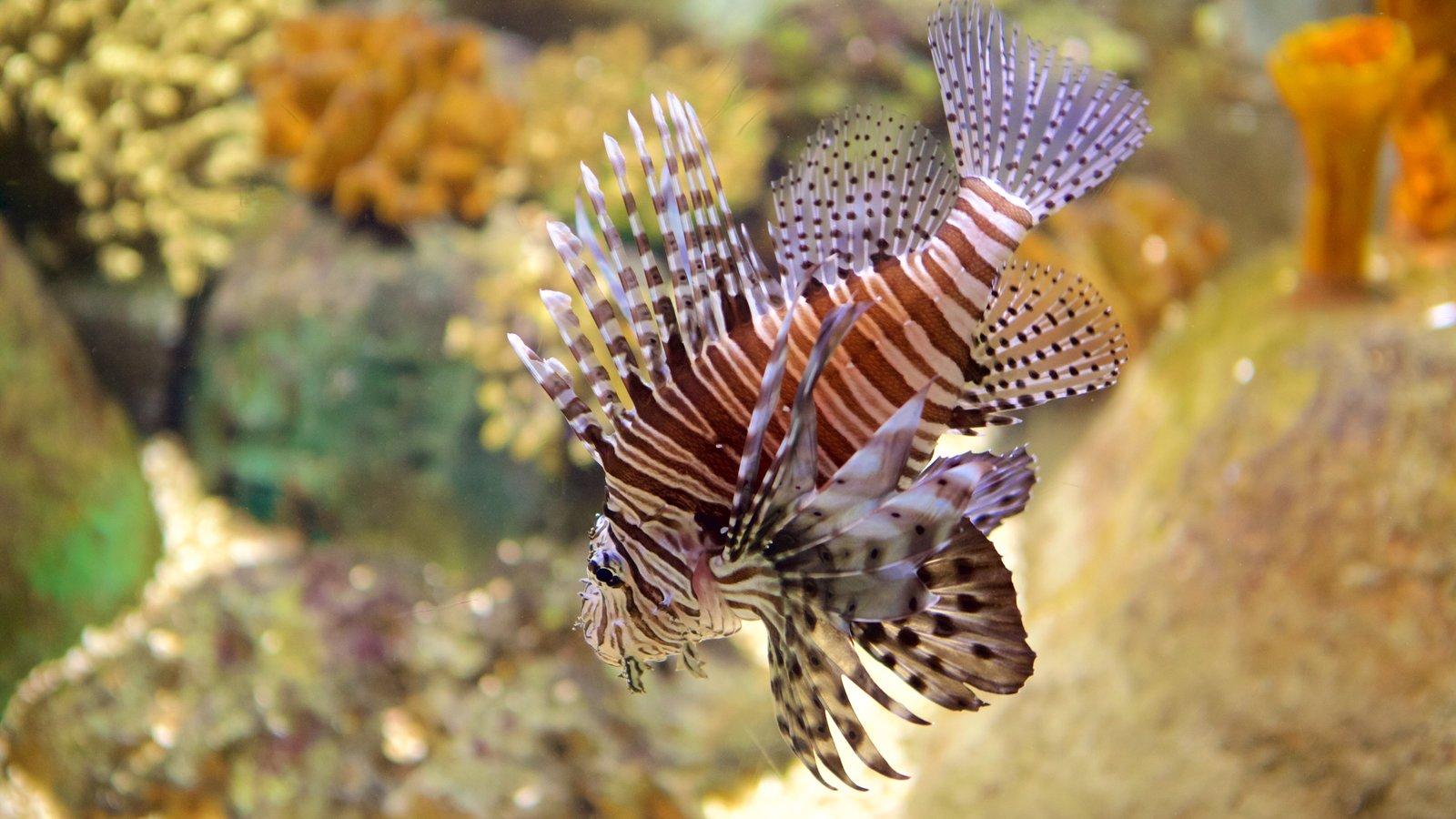 Oceanarium featuring marine life