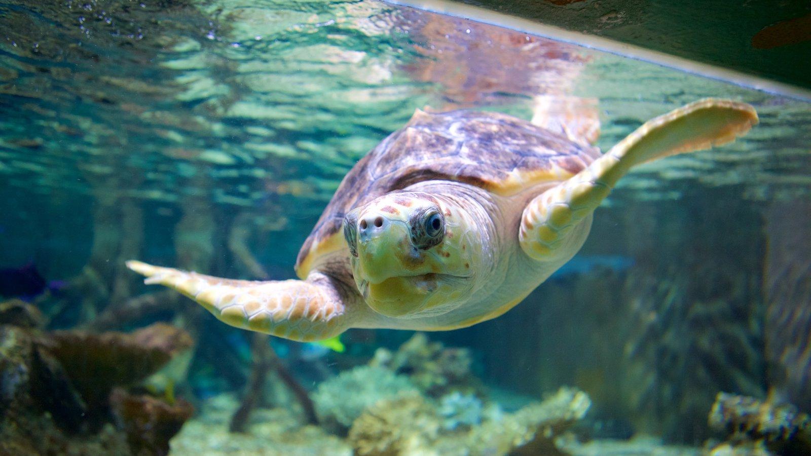 Oceanarium showing marine life