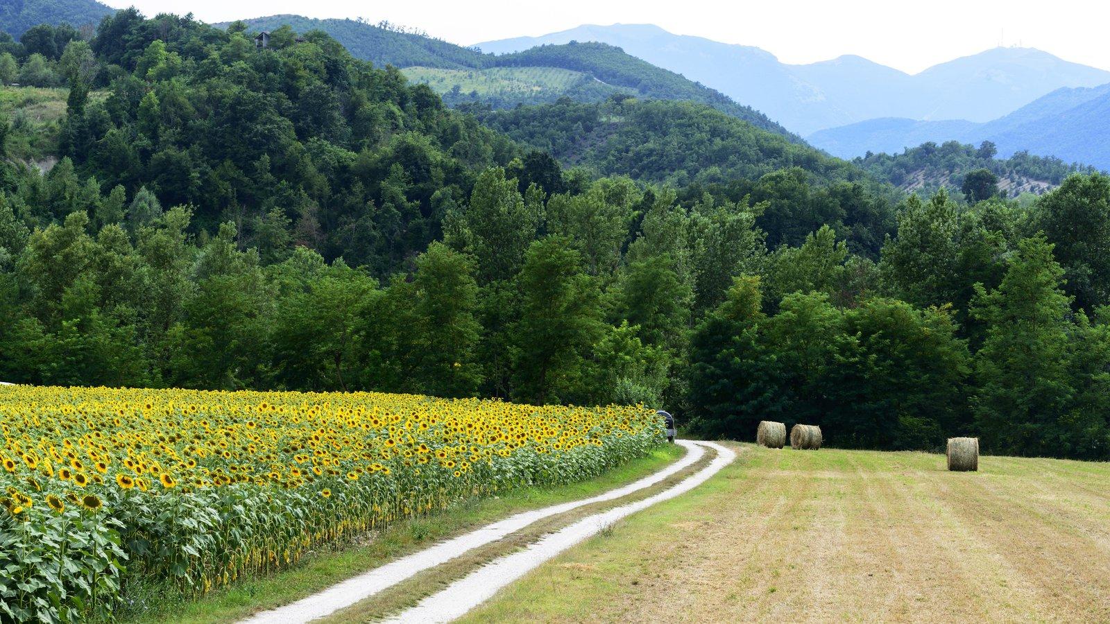 Pesaro which includes farmland