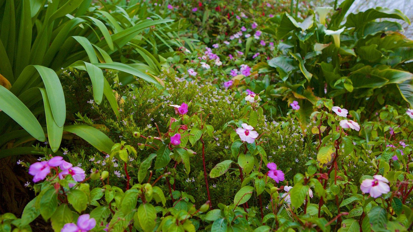 Flowers kingston jamaica