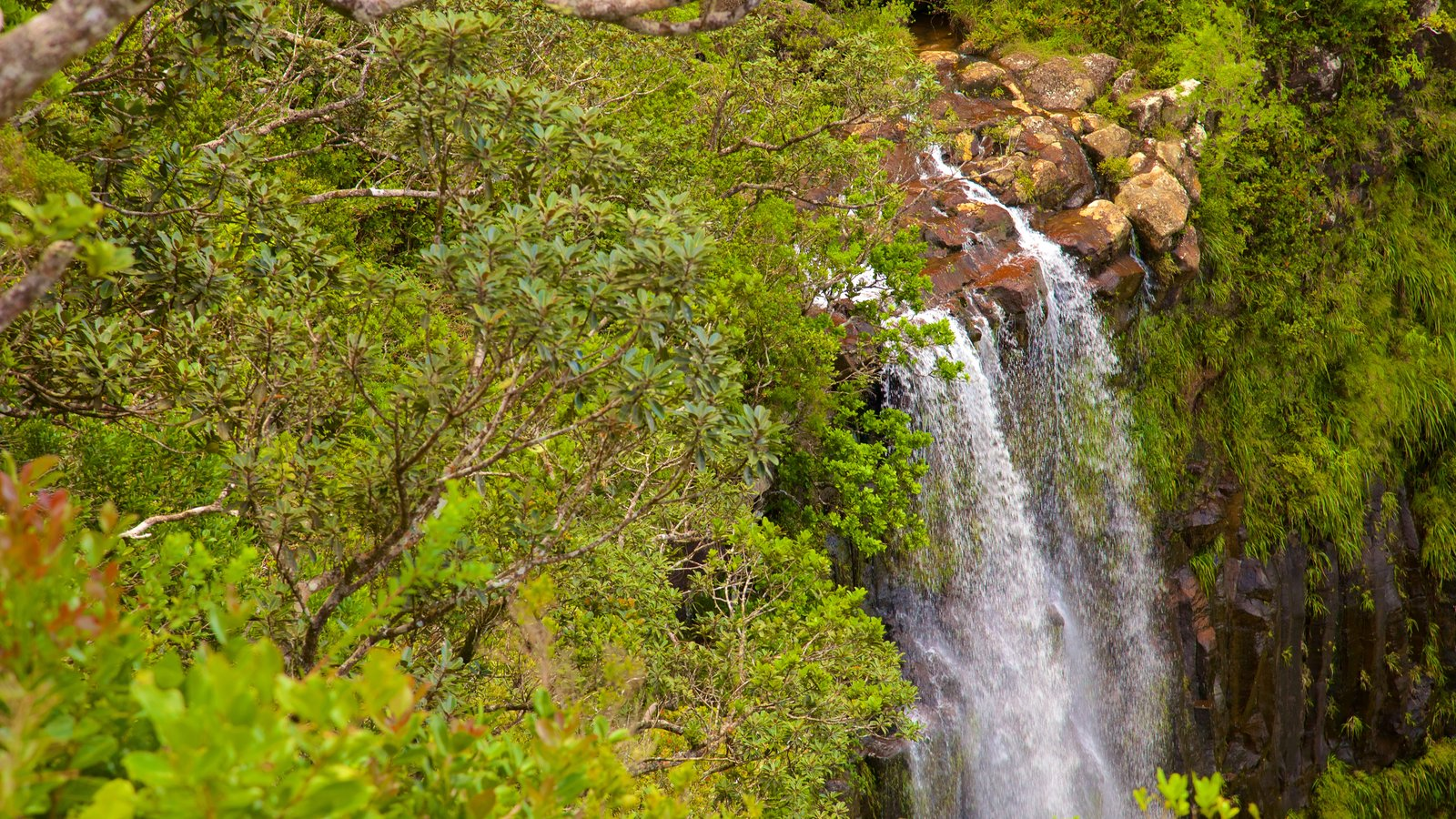 Black River Gorges National Park which includes a waterfall