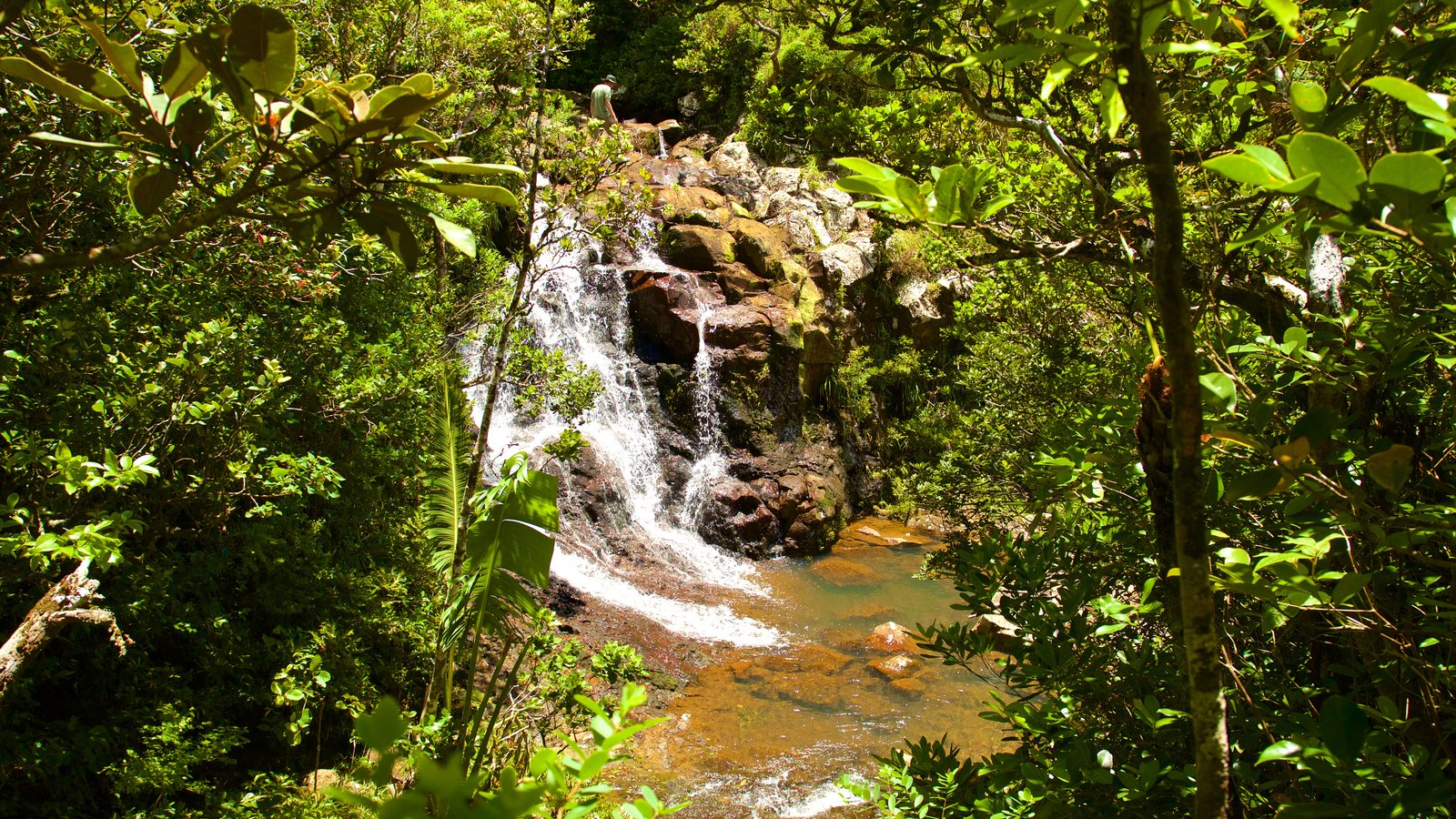 Black River Gorges National Park which includes rainforest, a pond and a cascade