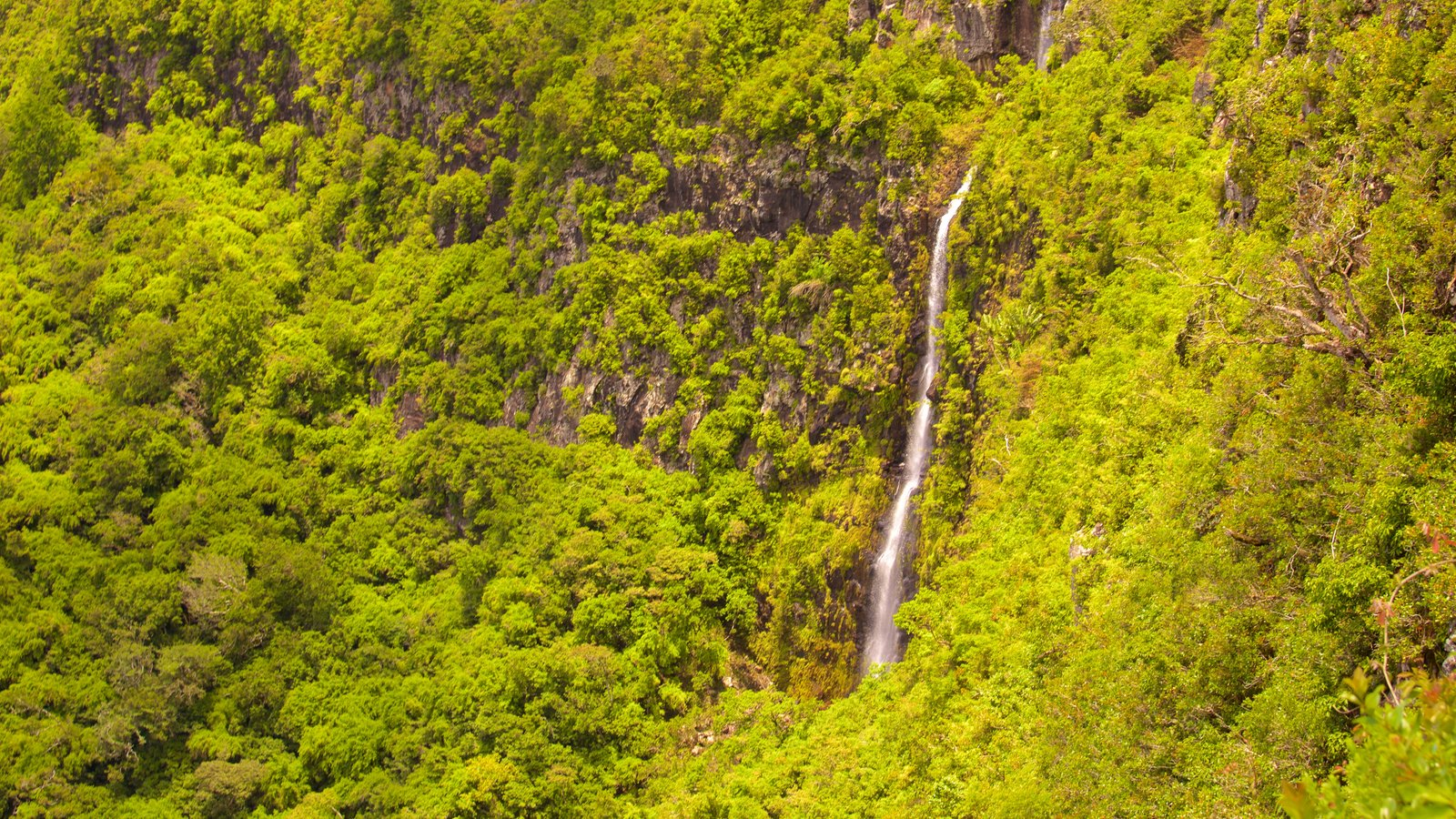 Black River Gorges National Park showing forests and a cascade