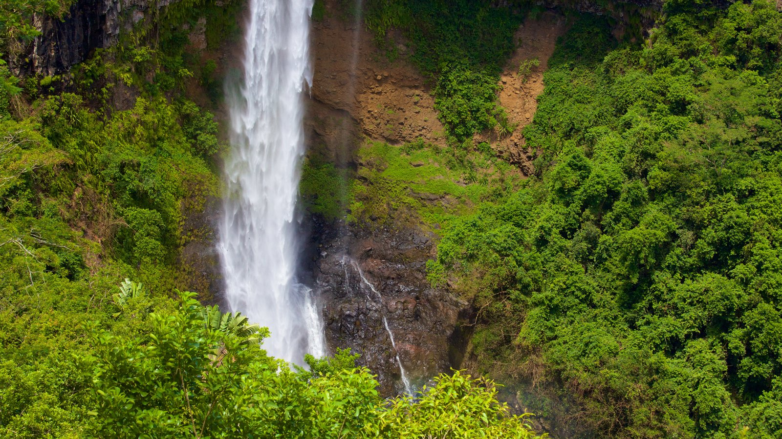 Black River Gorges National Park showing a waterfall and rainforest