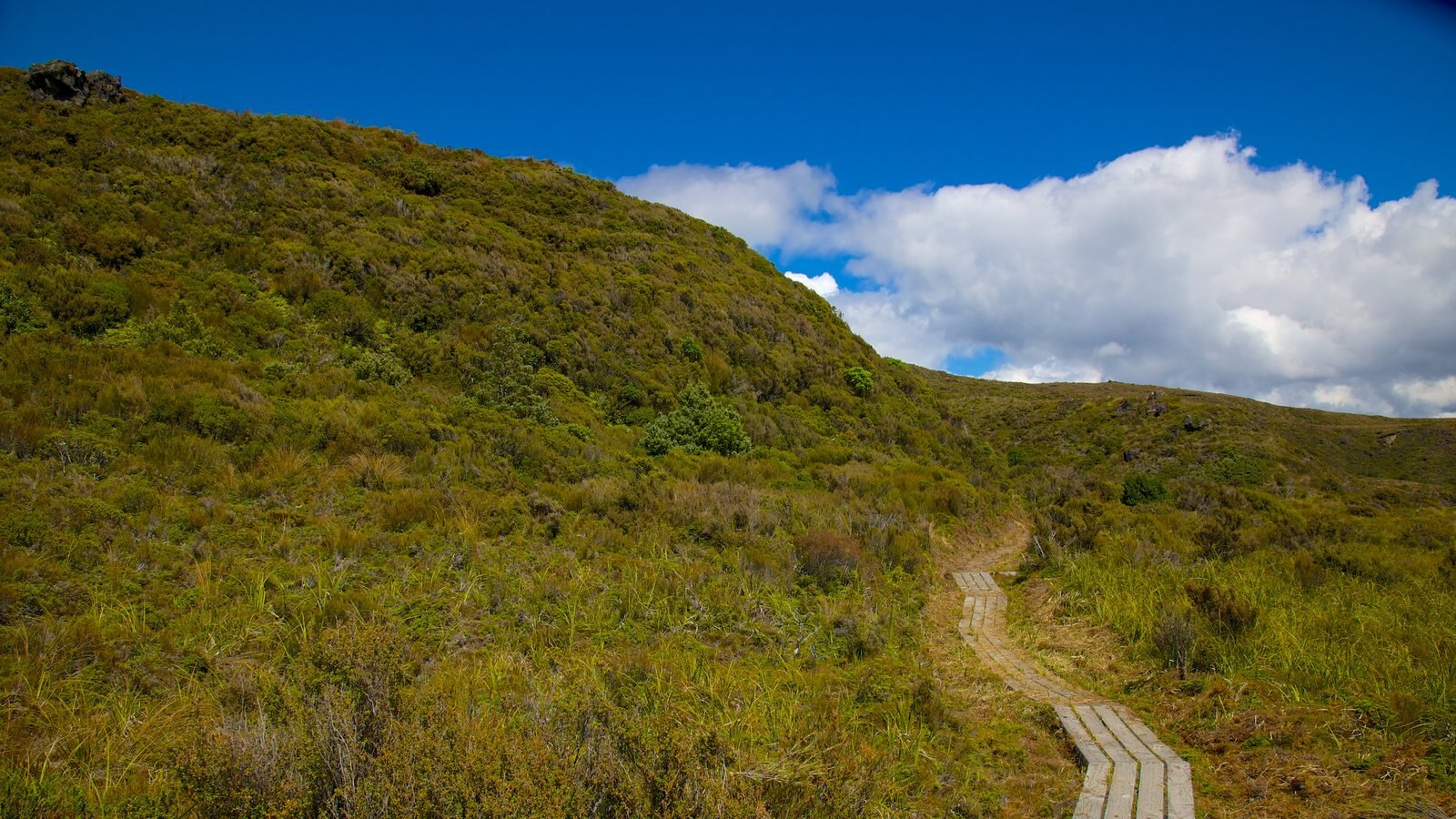 Gardens & Parks Pictures: View Images of Manawatu - Wanganui