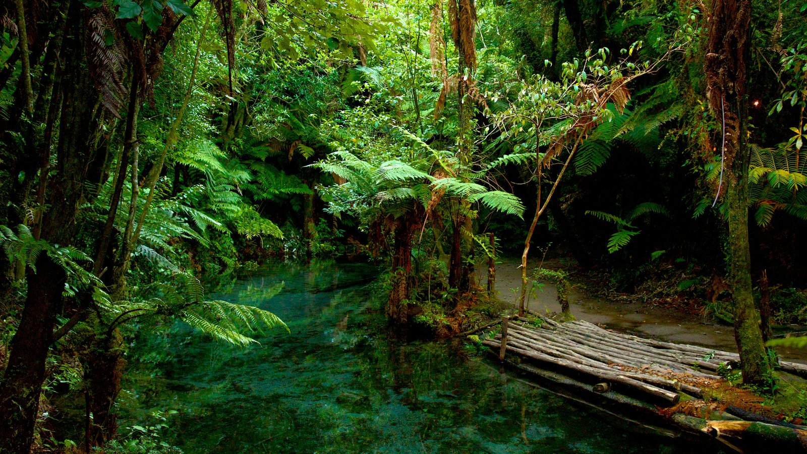 Rotorua featuring a river or creek and rainforest