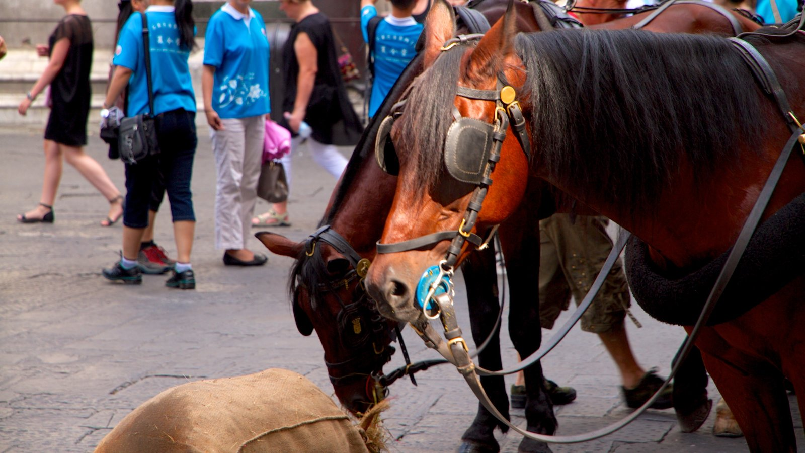 Piazza del Duomo which includes land animals as well as a small group of people