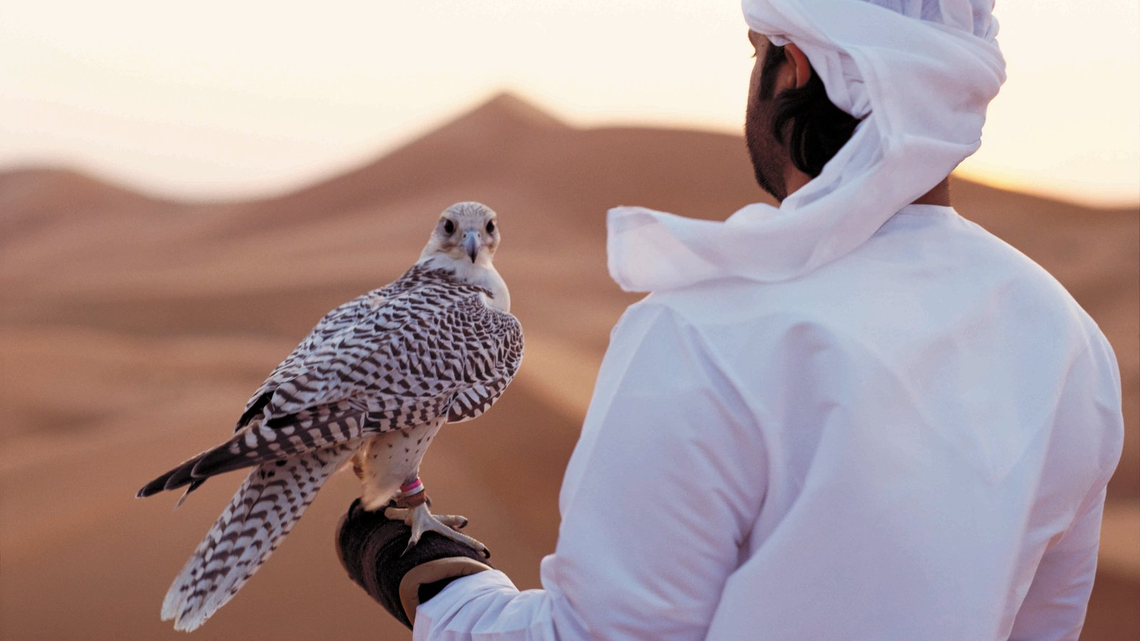 Yas Island featuring desert views and bird life as well as an individual male
