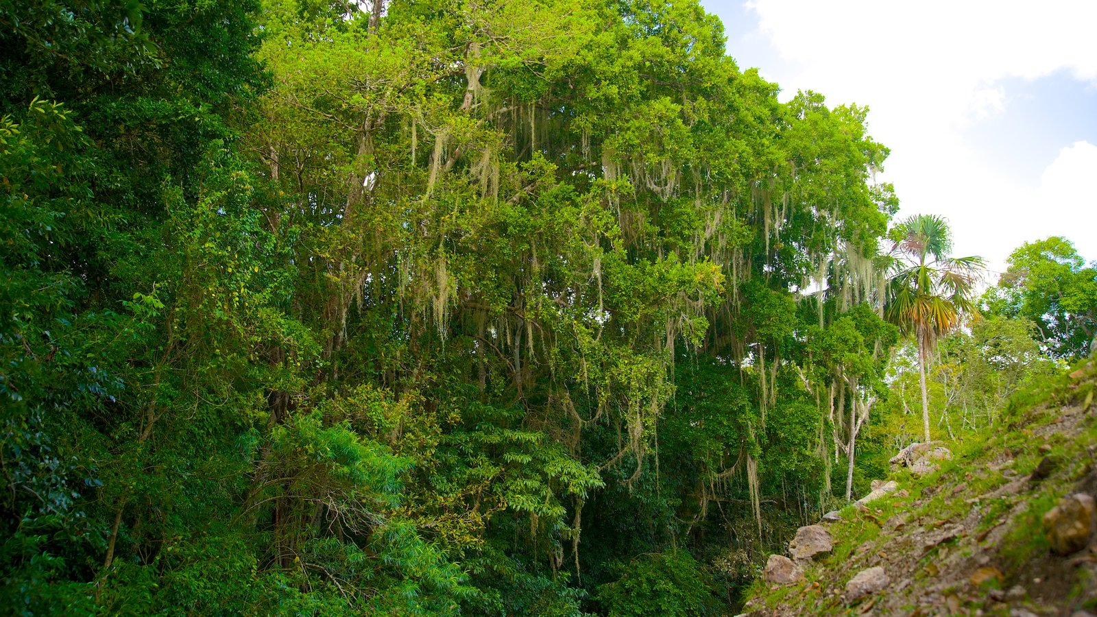 Lamanai featuring rainforest