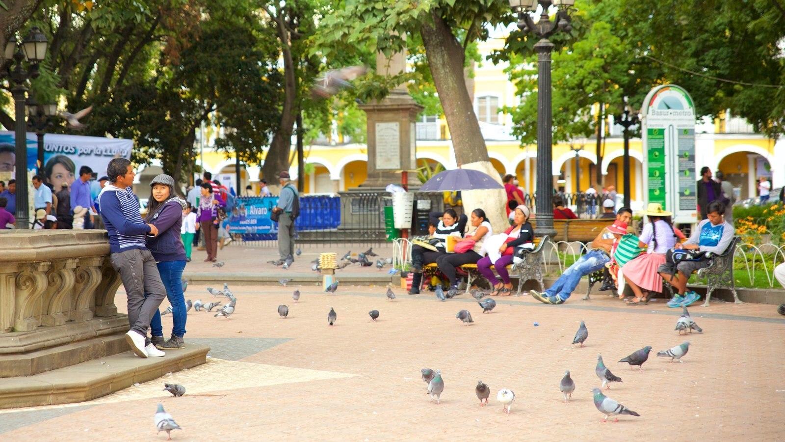 Plaza 14 de Septiembre que inclui vida das aves e uma praça ou plaza