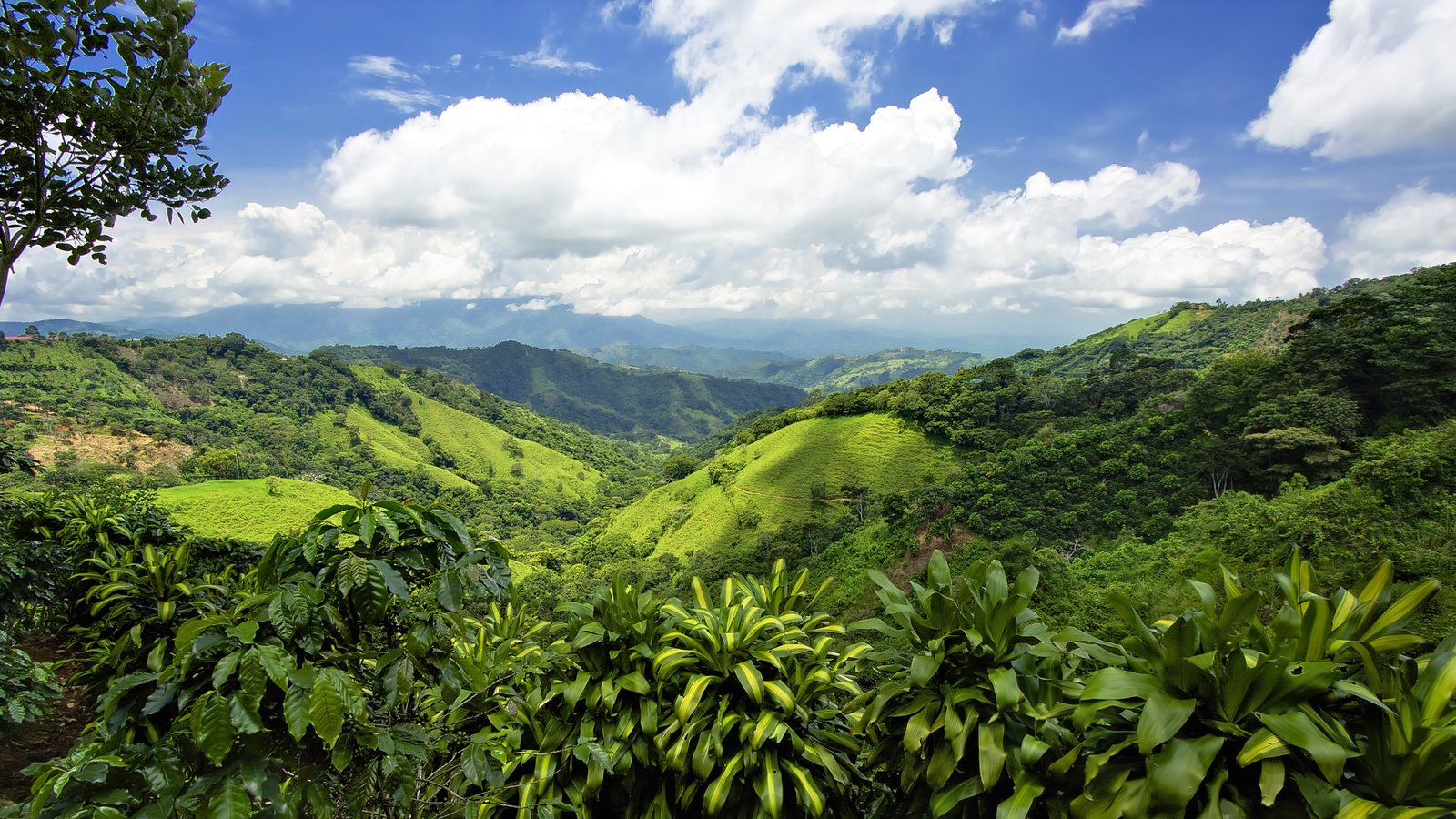 San Jose featuring rainforest and tranquil scenes