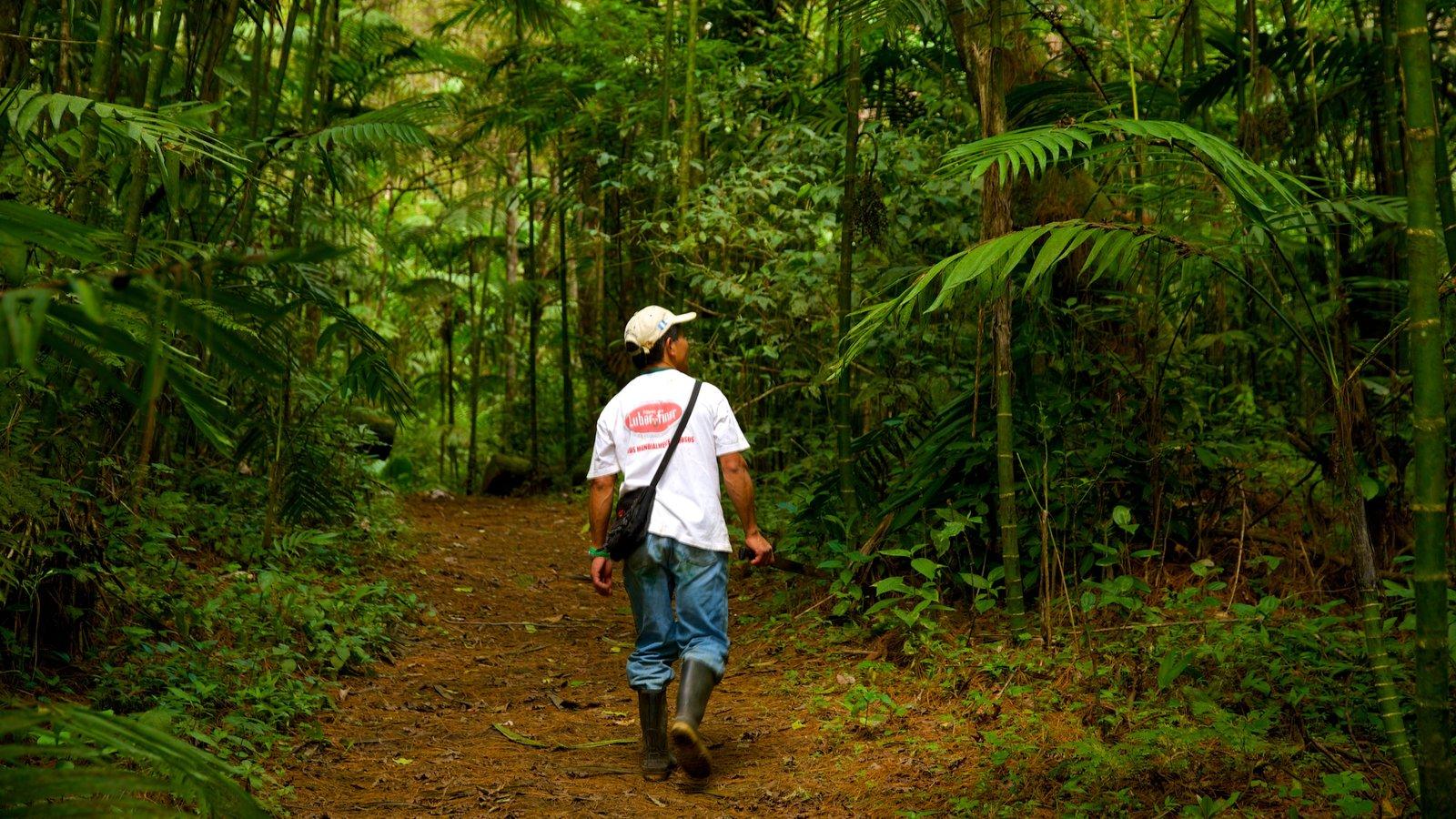 Parque Nacional Las Victorias ofreciendo selva y también un hombre