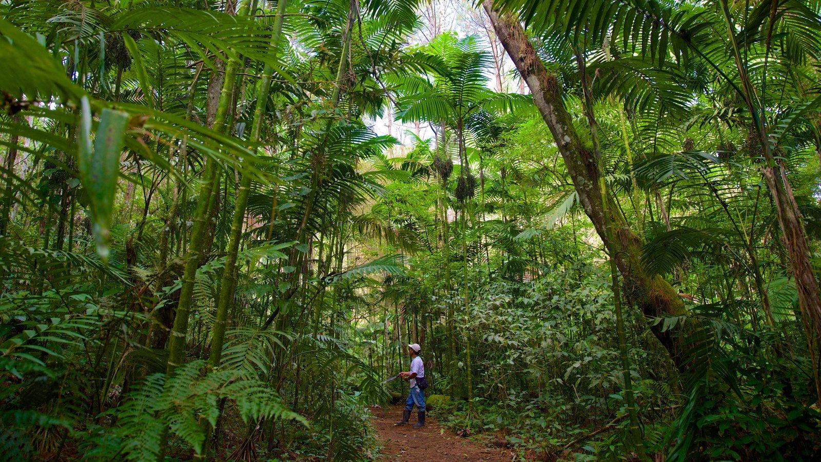 Parque Nacional Las Victorias que incluye selva y también un hombre