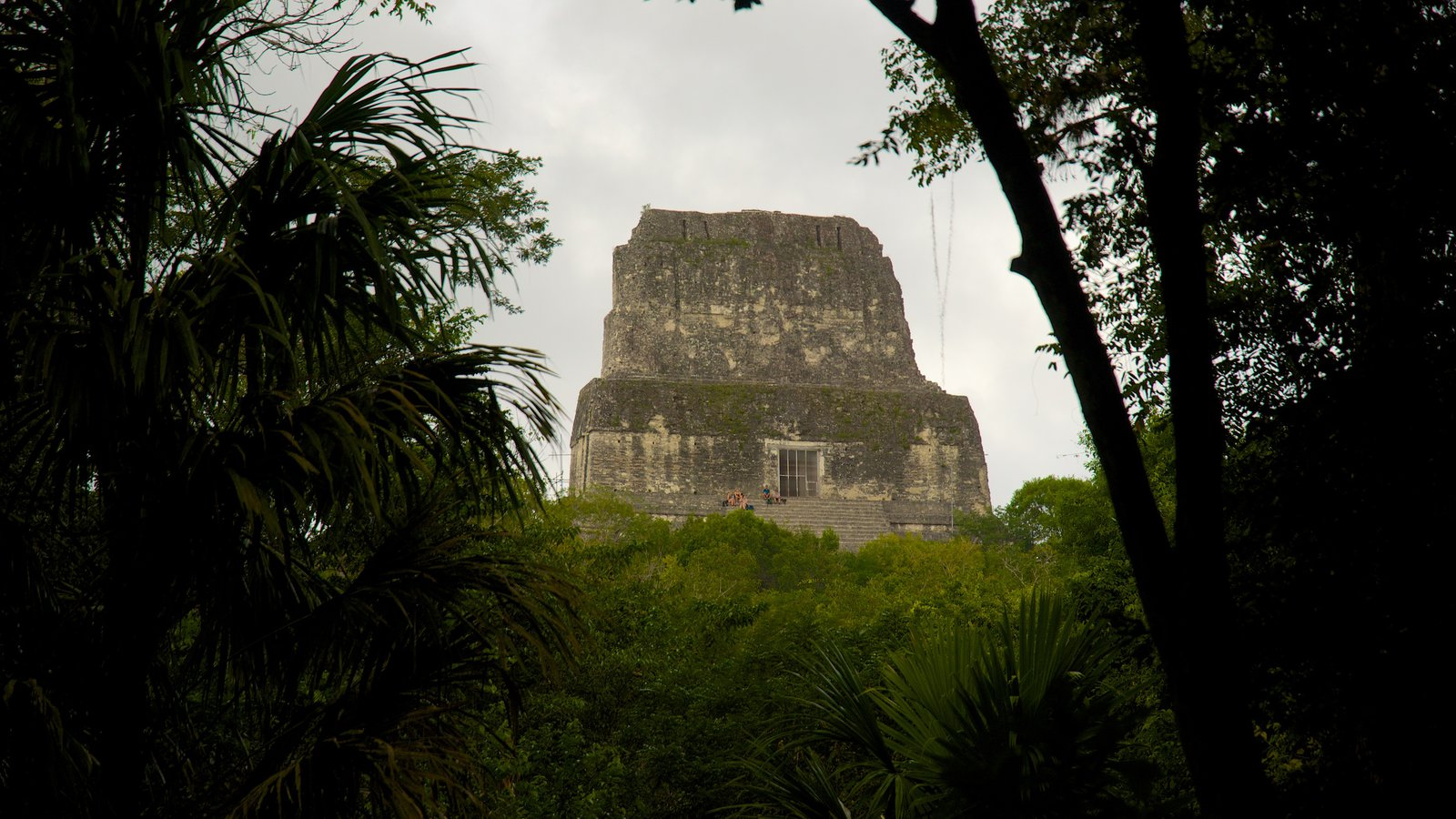 Tikal showing forest scenes and heritage elements
