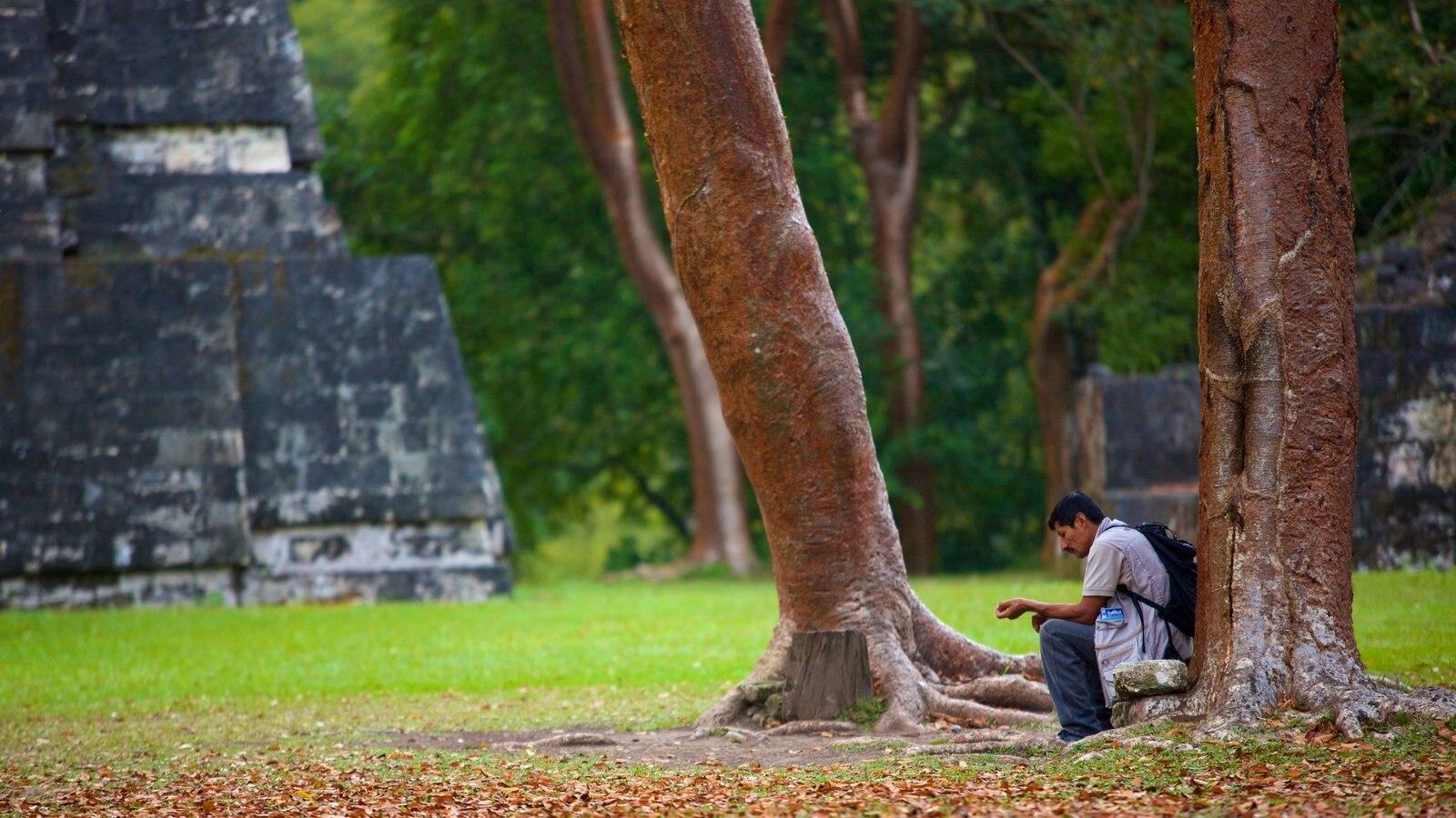 Tikal mostrando elementos de patrimônio assim como um homem sozinho