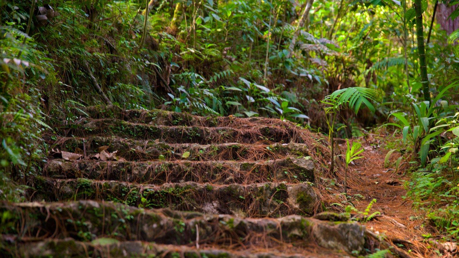 Parque Nacional Las Victorias mostrando selva