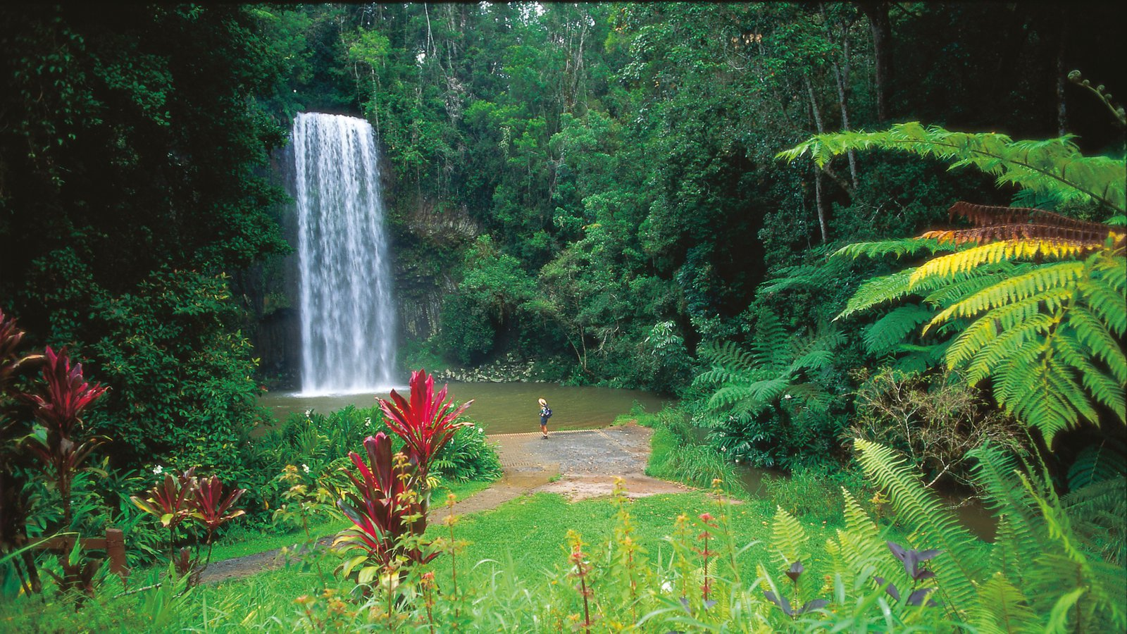 Waterfall pictures view images of tropical north queensland for The atherton