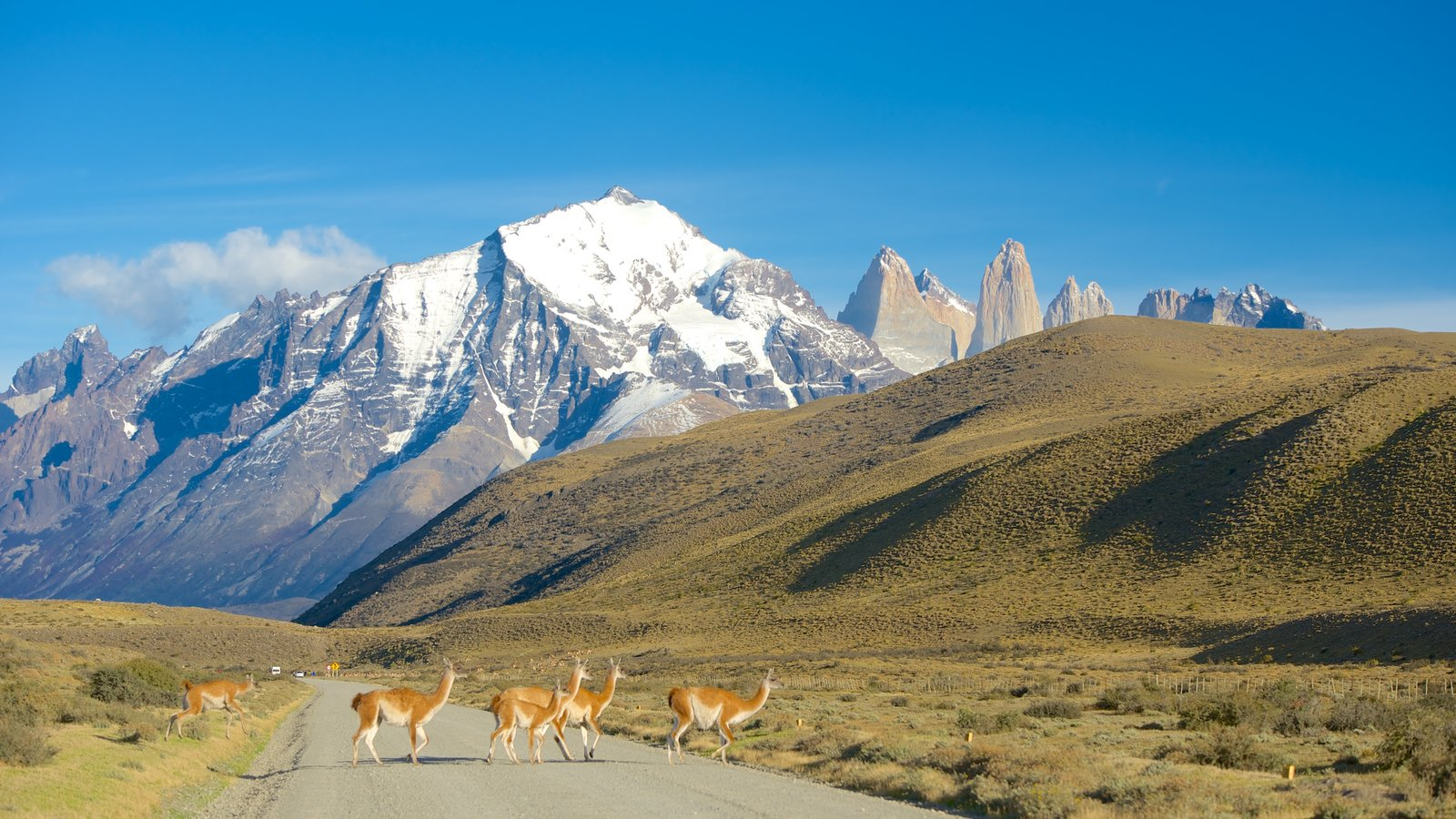 Torres del Paine National Park featuring mountains, snow and animals
