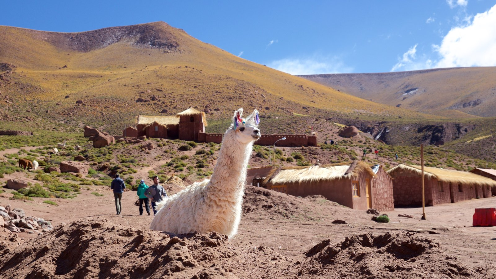 Machuca featuring landscape views, tranquil scenes and cuddly or friendly animals