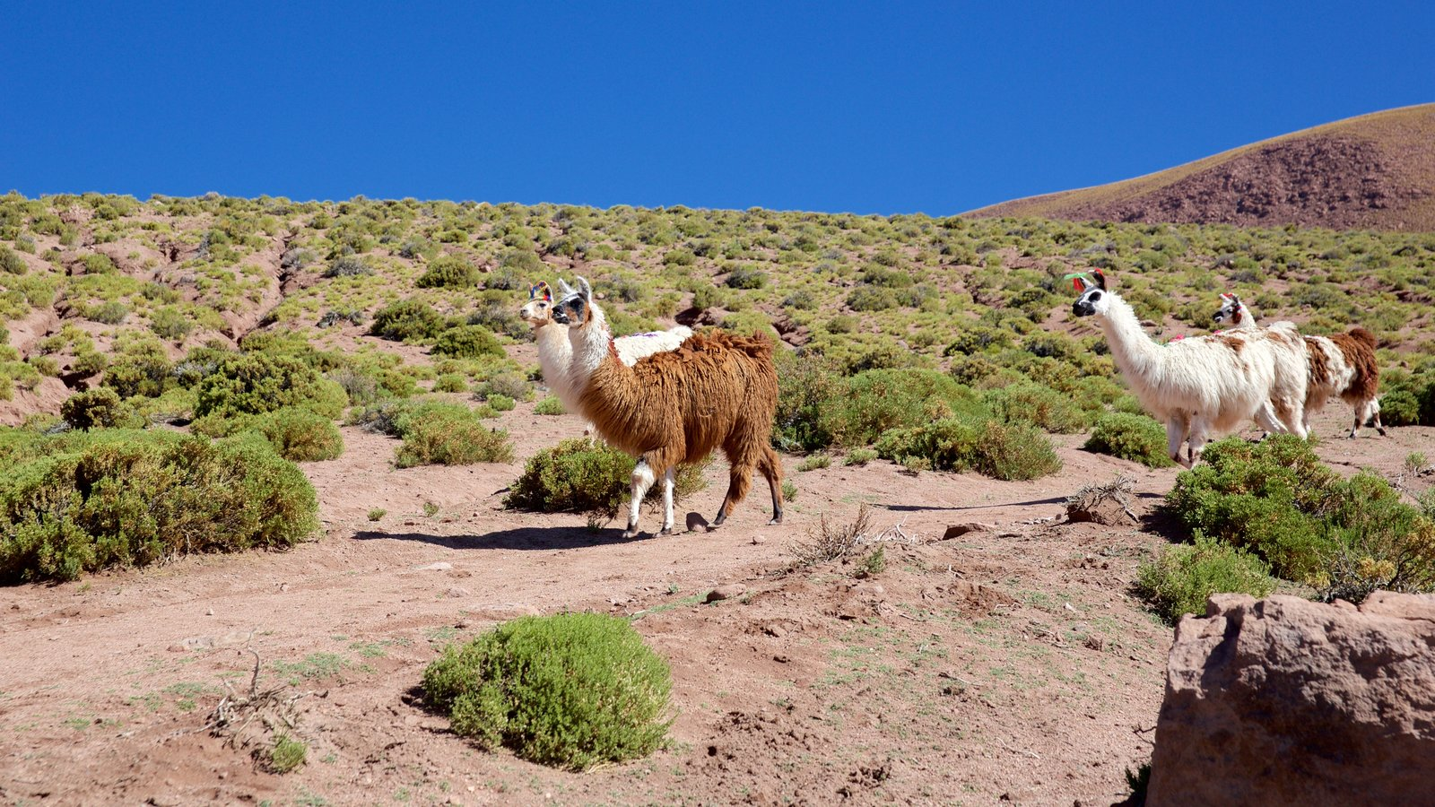 Machuca featuring tranquil scenes and cuddly or friendly animals