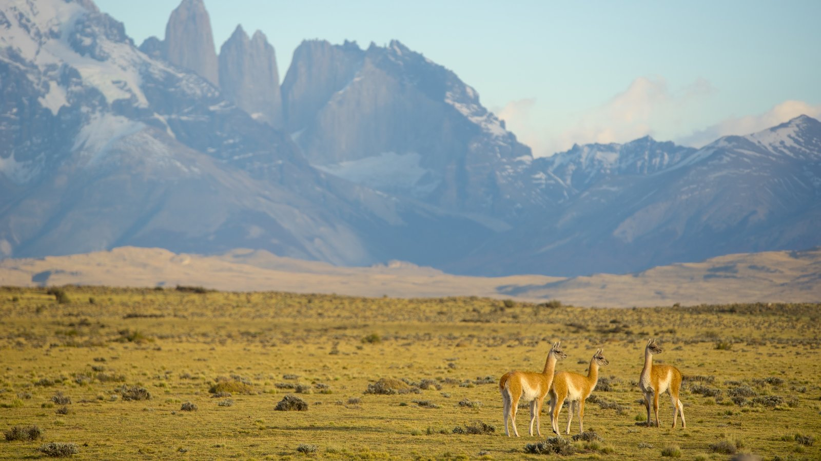 Torres del Paine National Park showing mountains, animals and tranquil scenes