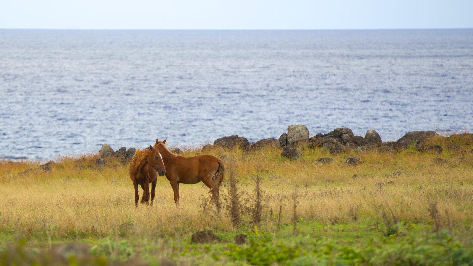 Isla de Pascua que incluye animales terrestres y vistas generales de la costa