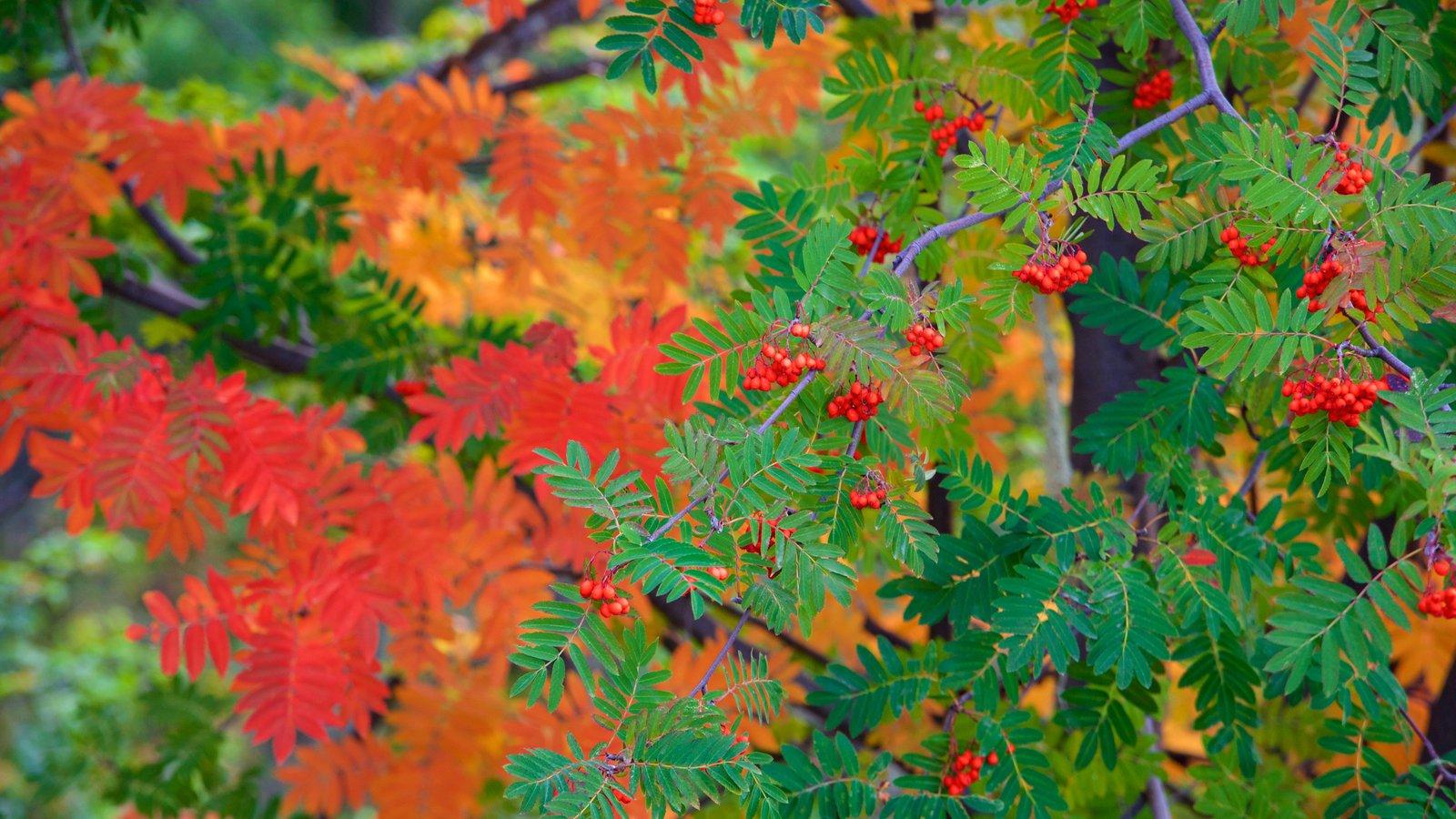 Bariloche caracterizando florestas e cores do outono