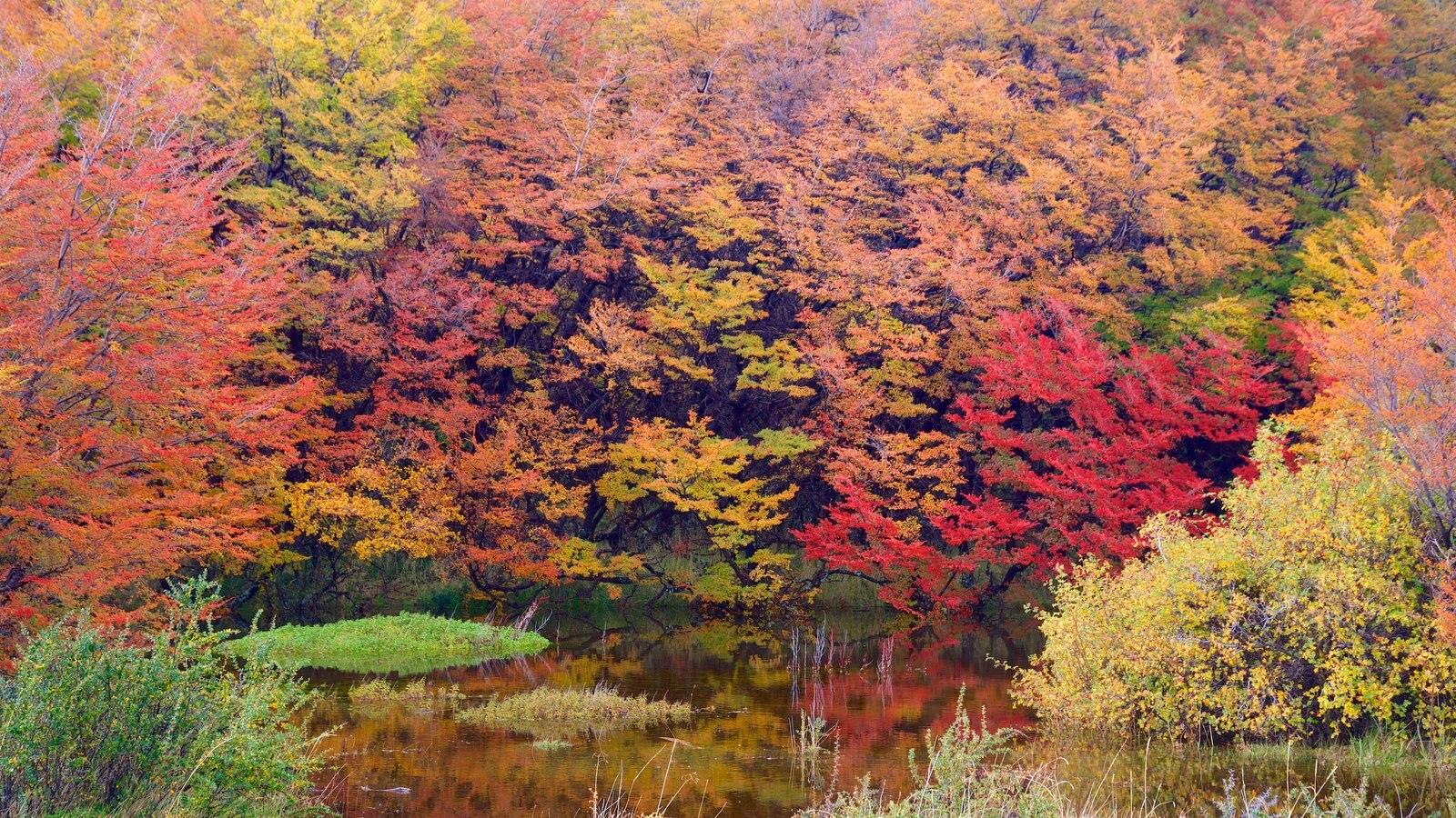 El Calafate caracterizando cenas de floresta, um lago e cores do outono
