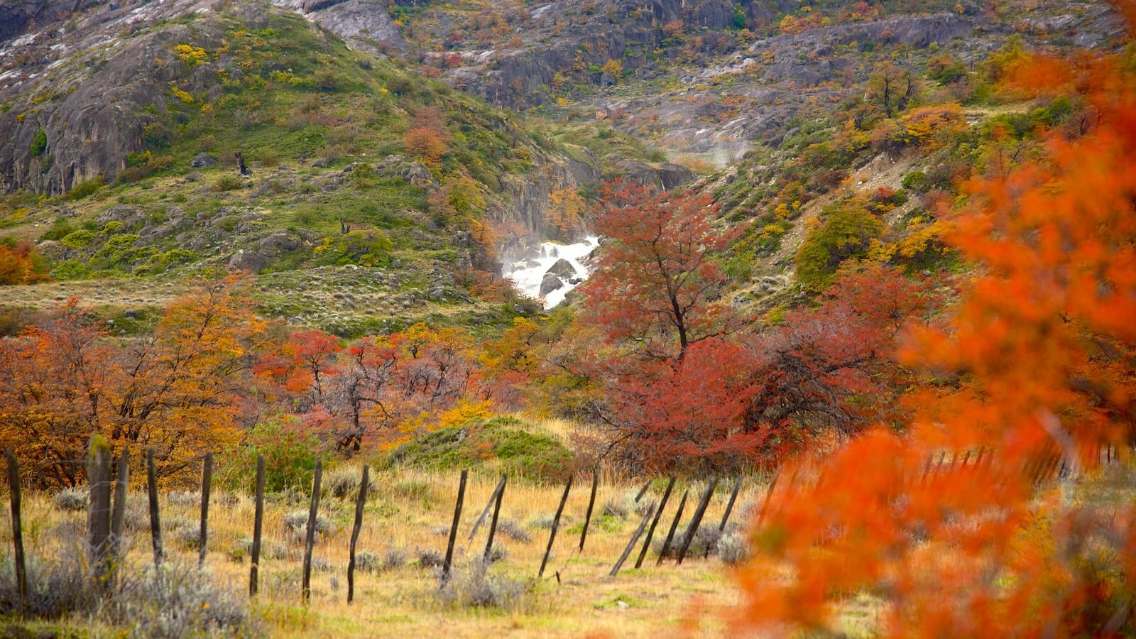 El Calafate caracterizando cenas tranquilas e cores do outono