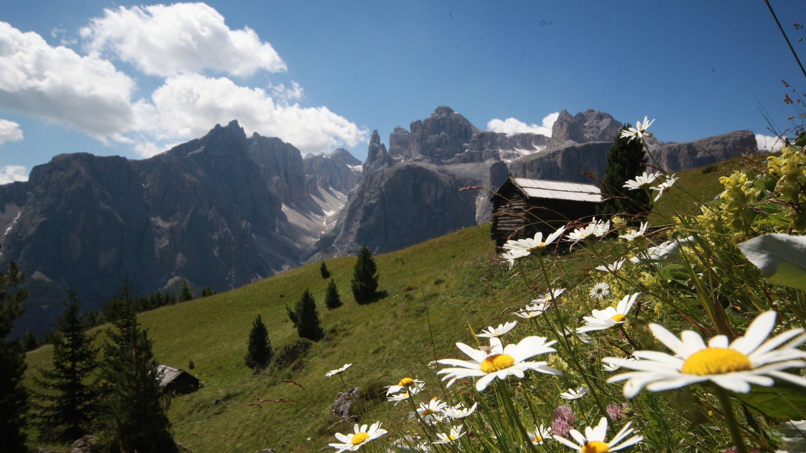 Alta Badia showing mountains, wildflowers and tranquil scenes