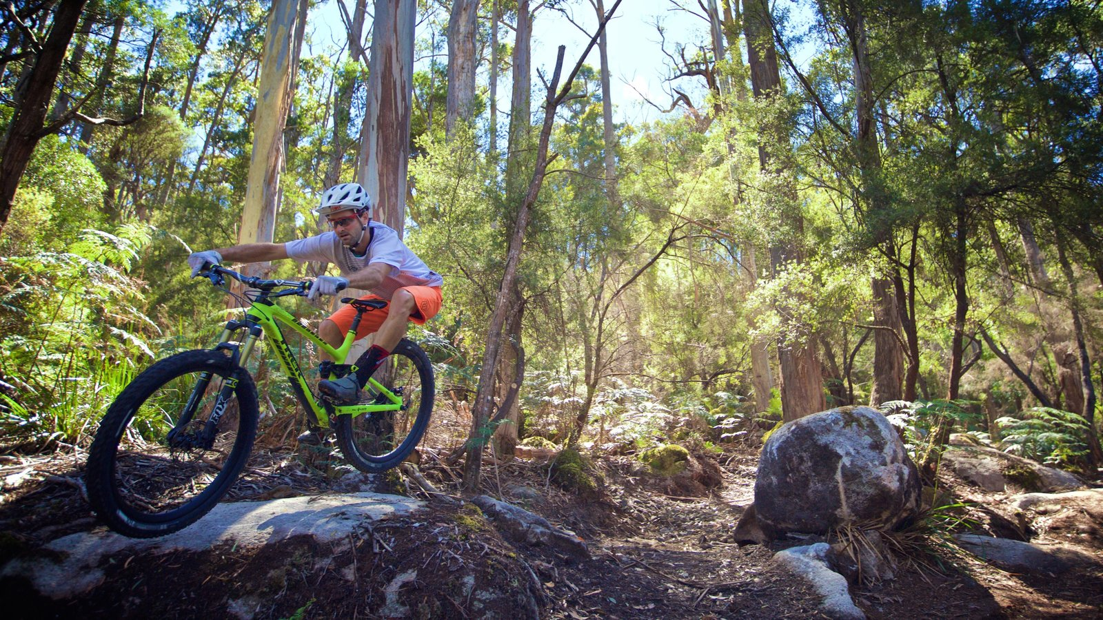 Derby featuring forests and mountain biking as well as an individual male