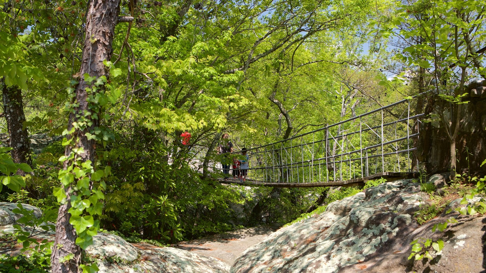 Lookout Mountain featuring forests and a bridge