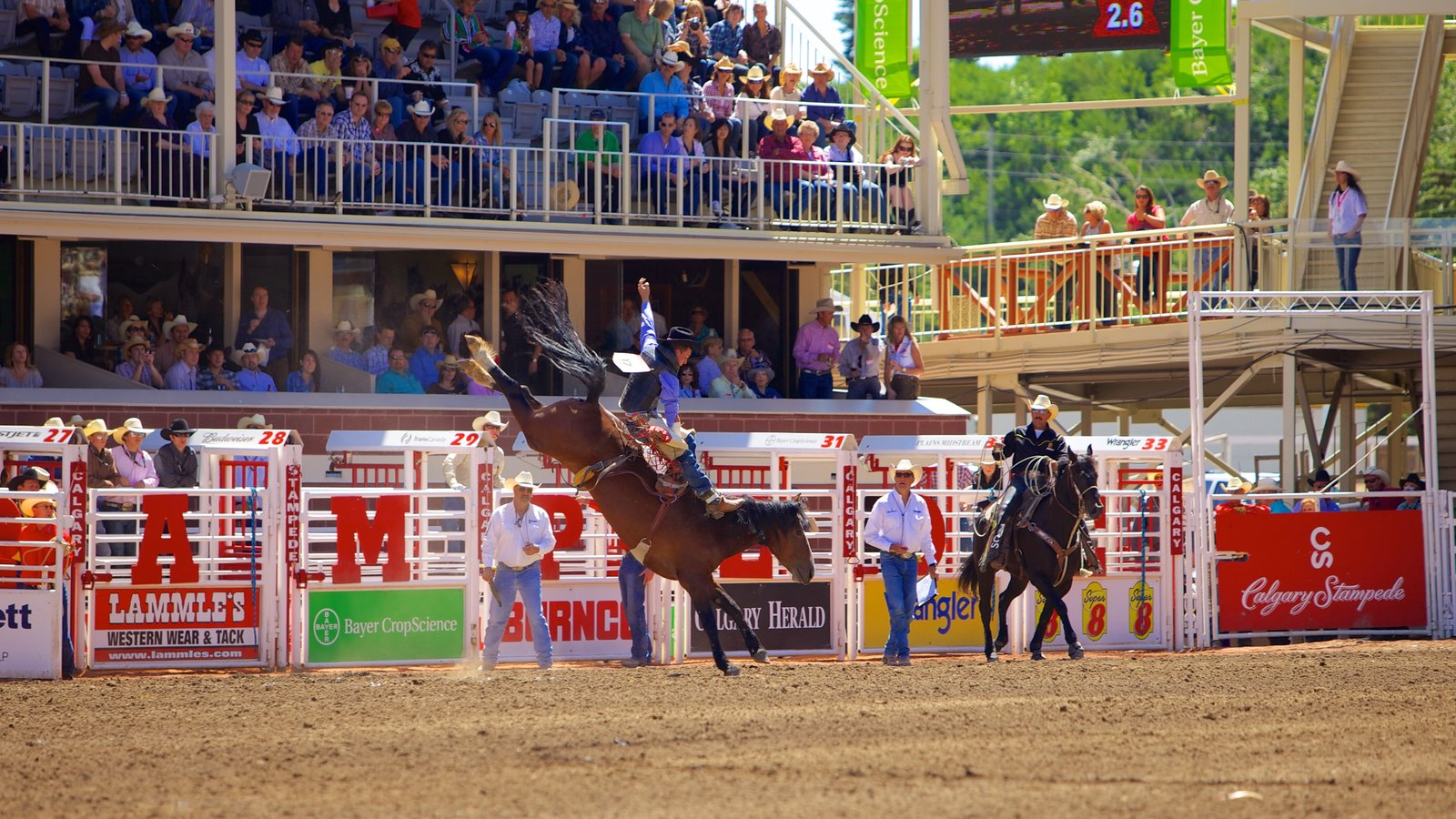 Calgary showing horse riding and a sporting event as well as a large group of people