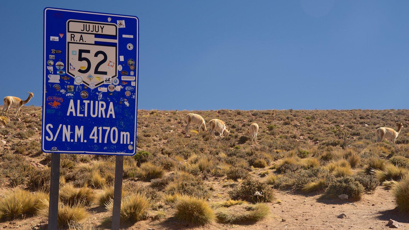 Jujuy mostrando sinalização