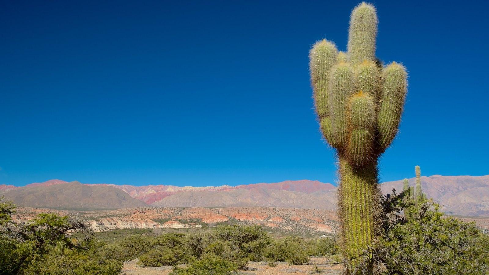 Jujuy caracterizando paisagens do deserto