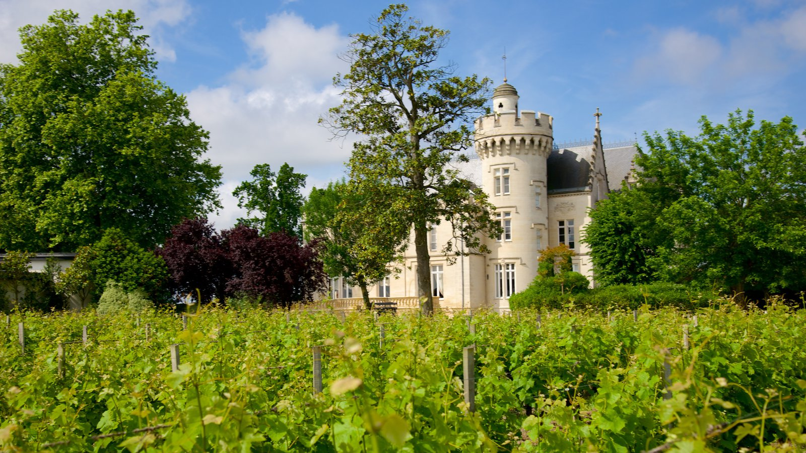 Chateau Pape Clement showing a park and chateau or palace