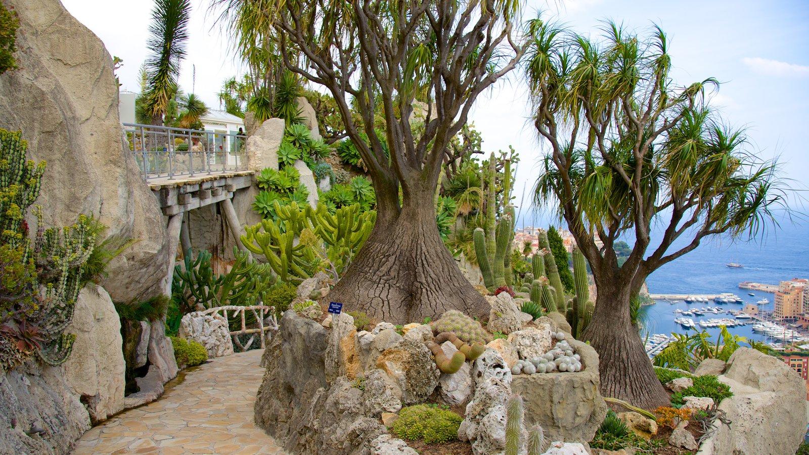 Exotic garden pictures view photos images of exotic garden for Jardin exotique monaco
