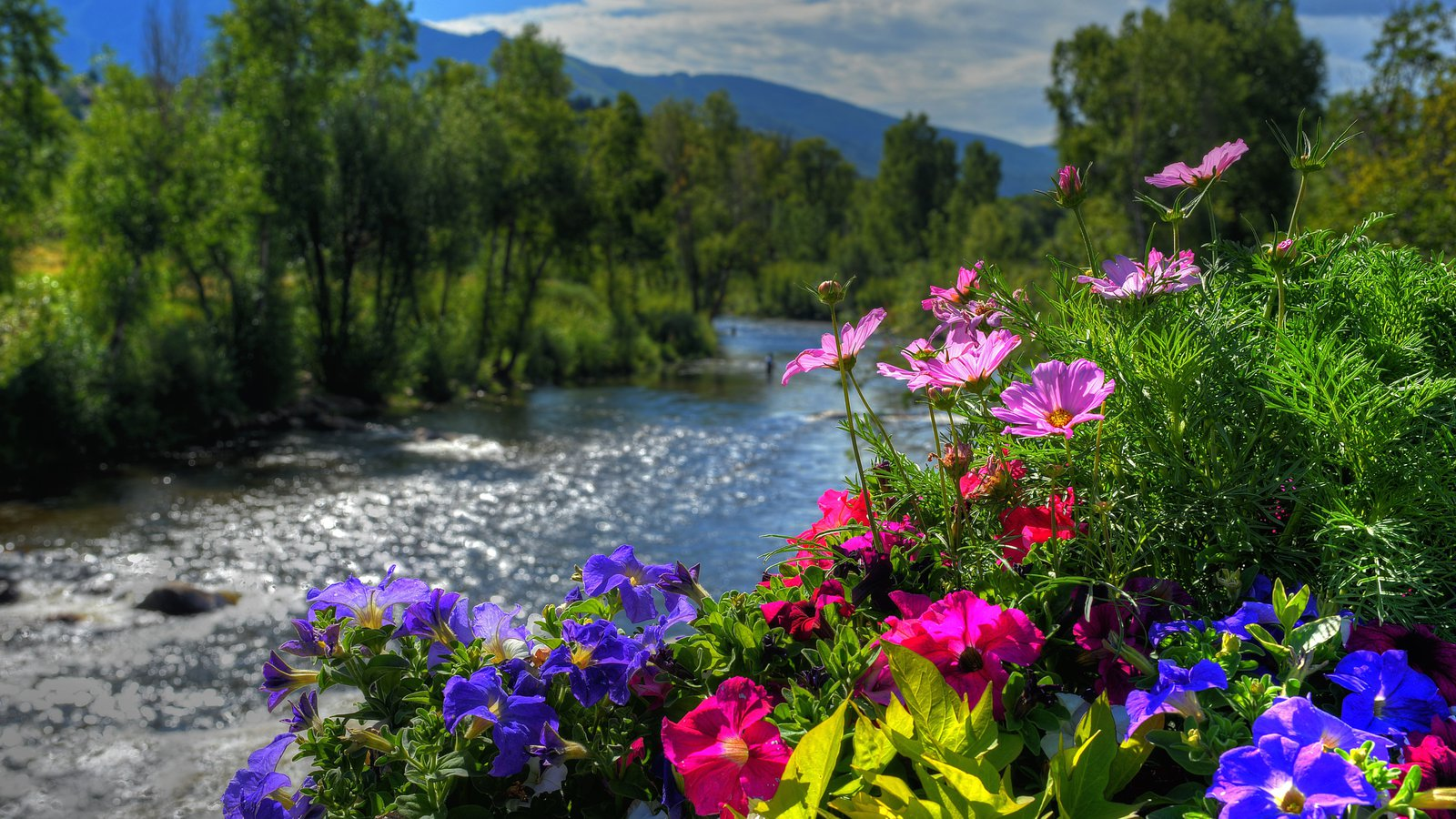 Steamboat Ski Resort Which Includes Flowers A River Or Creek And Tranquil Scenes