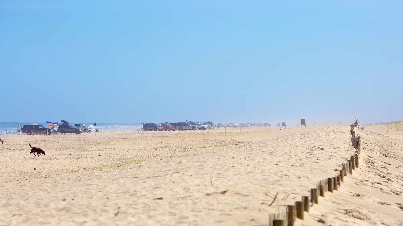 Assateague Island National Seashore which includes a beach and 4 wheel driving