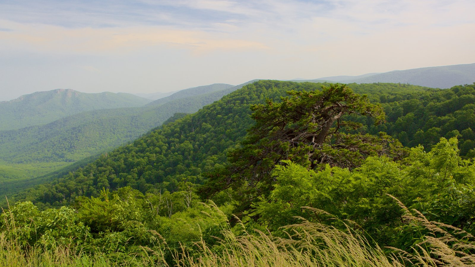 Shenandoah National Park which includes landscape views, tranquil scenes and mountains