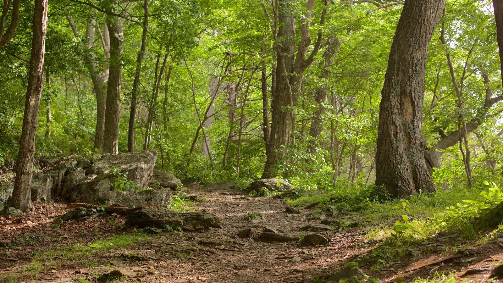 Parque Nacional Shenandoah que incluye escenas tranquilas y escenas forestales