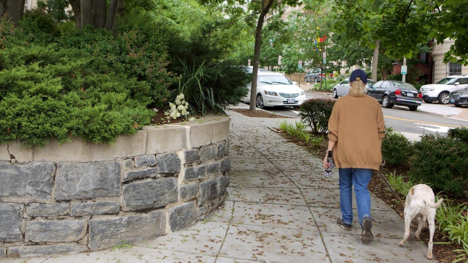 Embassy Row mostrando um parque assim como uma mulher sozinha