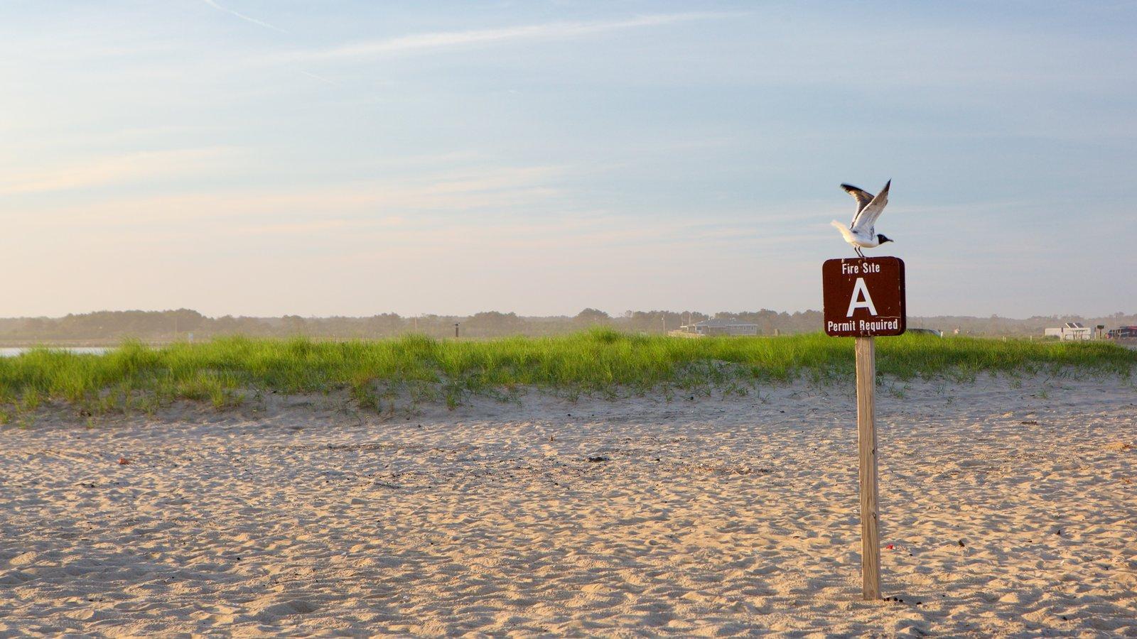 Chincoteague que incluye una playa, señalización y vida de las aves