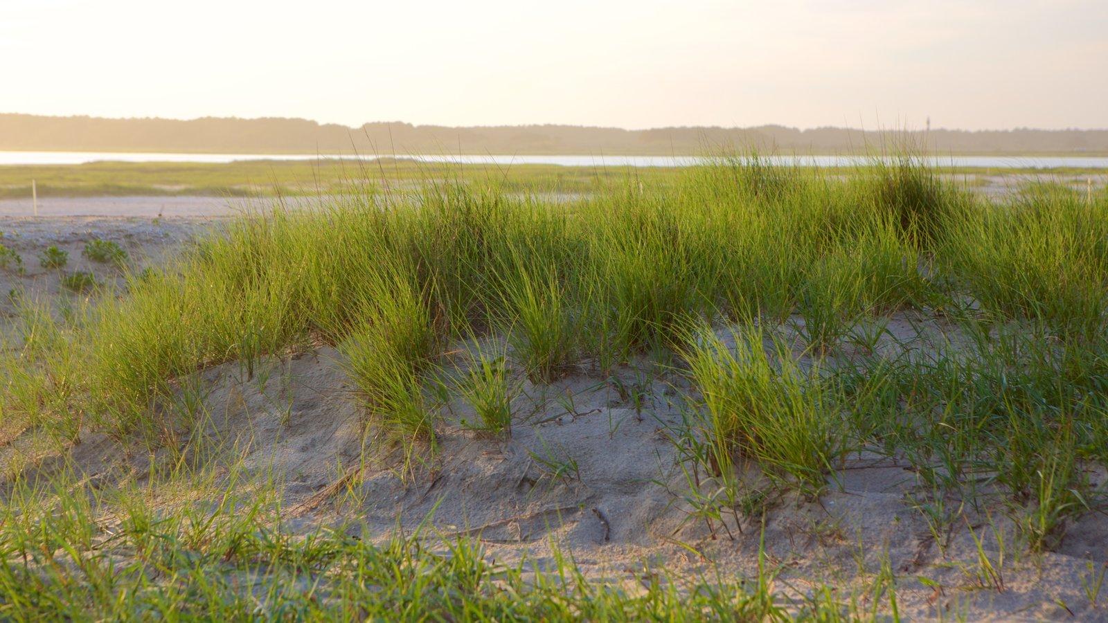 Chincoteague ofreciendo una playa de arena y vistas generales de la costa
