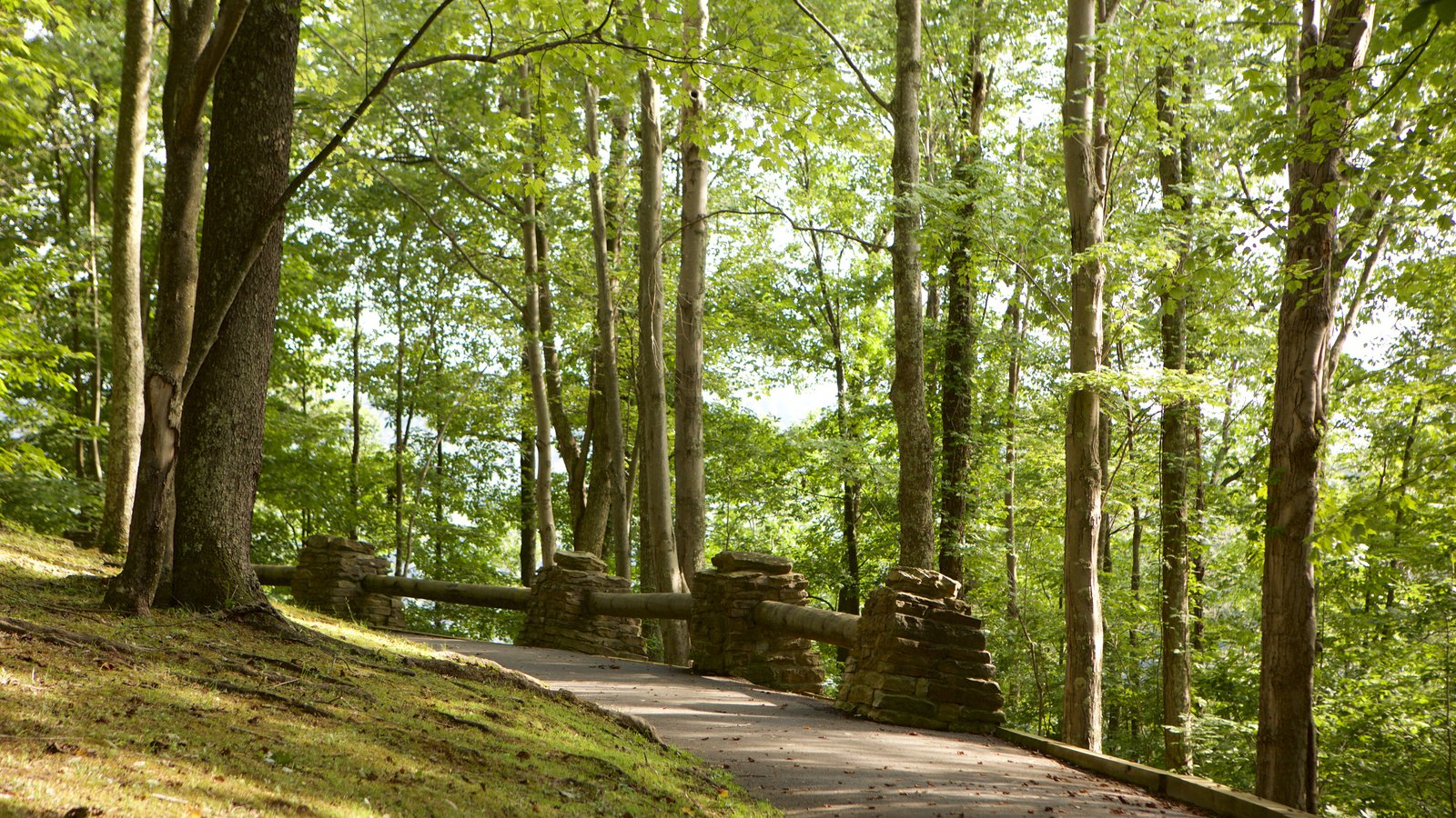 Hawks Nest State Park showing a park and forest scenes