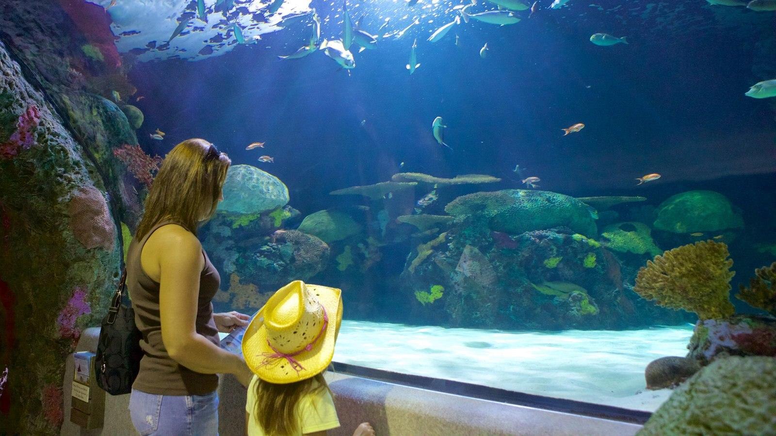 Virginia Aquarium And Marine Science Center Pictures View