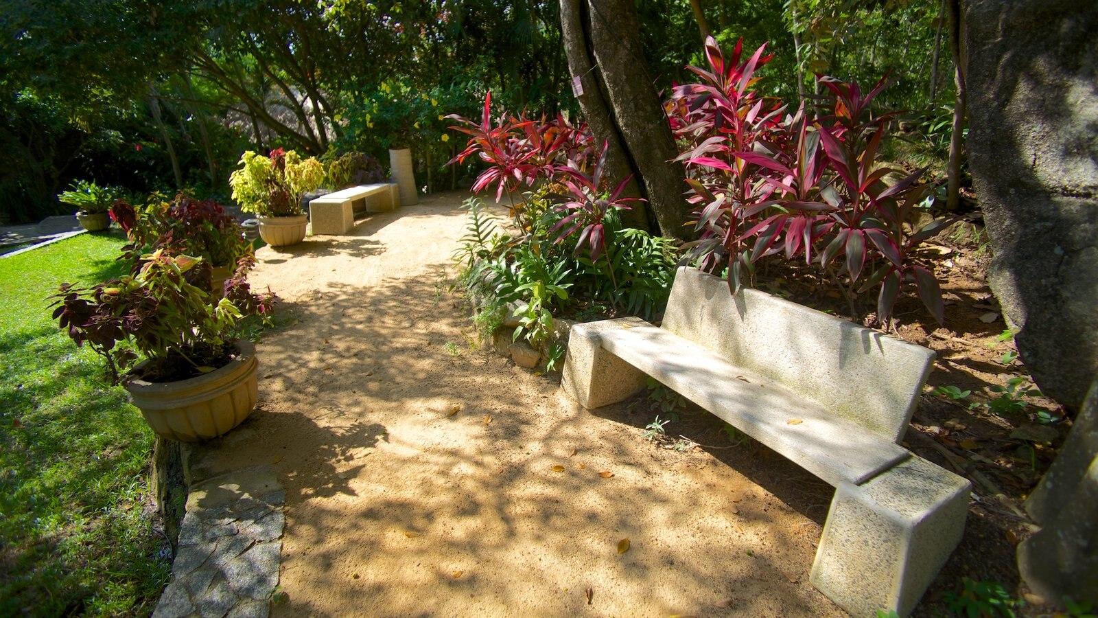 Jardin Botanico De Acapulco Showing A Park