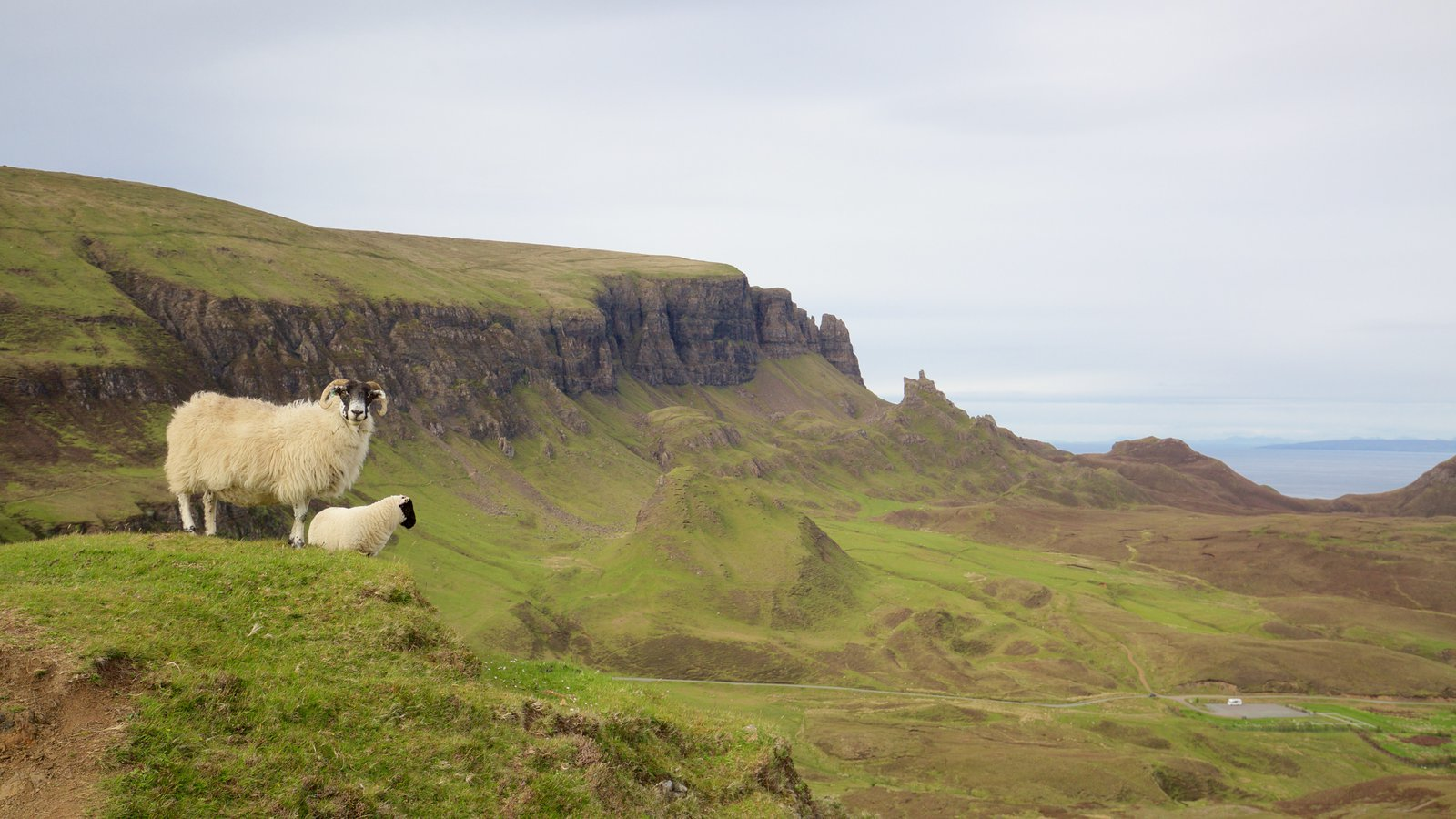 Quiraing which includes mountains, land animals and tranquil scenes